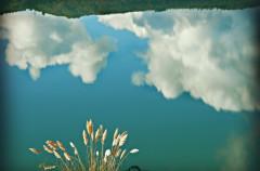 Cinco películas imprescindibles sobre el medio ambiente