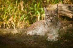 Los 5 animales más característicos de la fauna española
