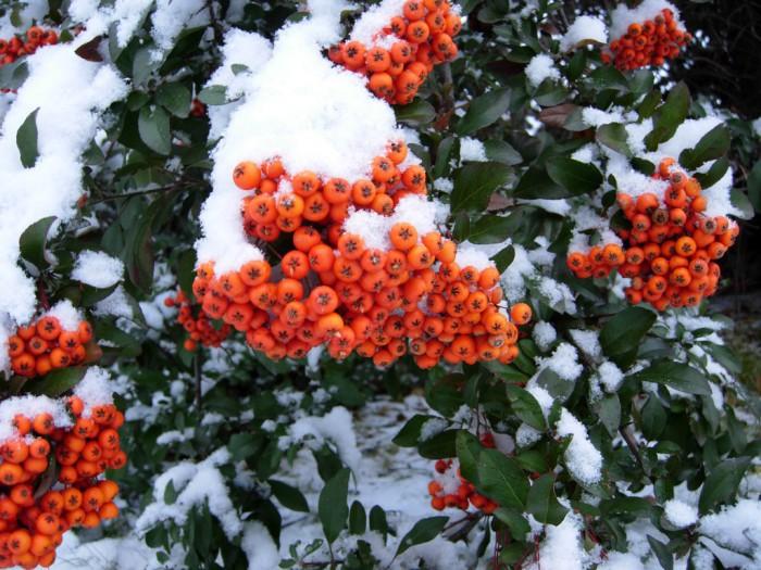 El cuidado de las plantas en invierno