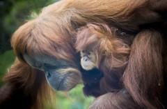 5 especies que podrían extinguirse este 2015