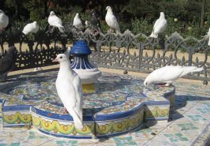 Las palomas se hacen famosas... por destrozarlo todo