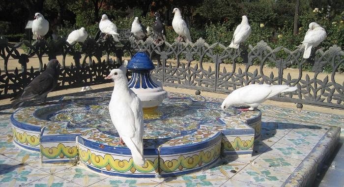 Las palomas se hacen famosas… por destrozarlo todo
