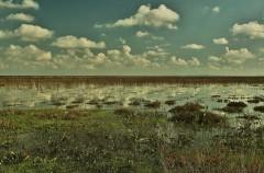 Ecologistas en Acción denuncia la impunidad de los furtivos en Doñana