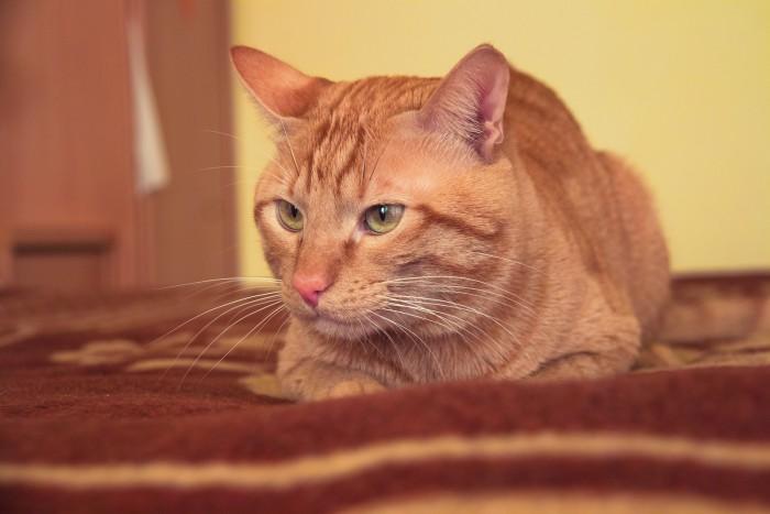 Consejos para adiestrar a nuestro gato (II)