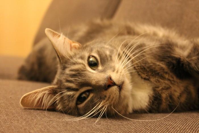 Consejos para adiestrar a nuestro gato (III)