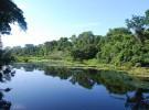 Algunas curiosidades sobre la Amazonia