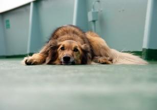 Las 5 enfermedades más comunes en perros