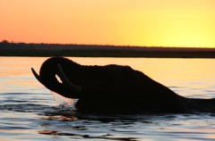 Botswana, un paraíso de exuberante naturaleza