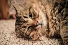 Consejos para adiestrar a nuestro gato (I)