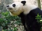 Las especies en peligro de extinción se duplican