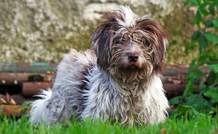 Cómo evitar que a tu perro se le caiga el pelo