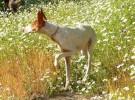Consejos económicos a la hora de comprar el pienso de nuestros perros