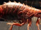 Cómo quitar las pulgas
