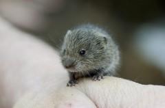Algunas curiosidades sobre los roedores