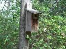 5 consejos para montar nuestra caja nido