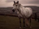 Algunas curiosidades sobre los caballos
