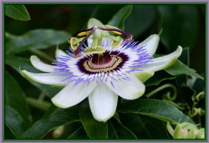 Las 5 flores más bonitas del mundo