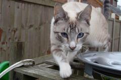 Cómo hacer que el gato utilice el WC