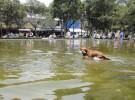 Tres zonas en las que tu perro puede bañarse