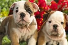 Tipos de desparasitaciones para nuestros perros y gatos