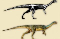 Chilesaurus diegosuarezi, así es el nuevo dinosaurio descubierto en Chile