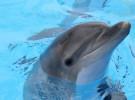 Algunas curiosidades sobre los delfines