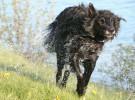 Resort Canino Can Janè, un paraíso para nuestros perros