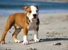 Recomendaciones para ir con tu perro a la playa