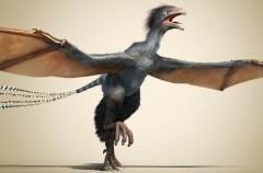 Yi qi, el dinosaurio del que podrían venir las aves