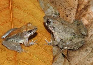 Top 10 de las especies descubiertas en 2015
