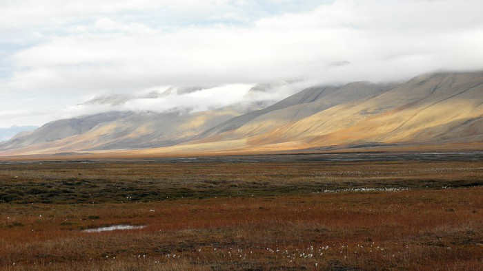 tundra, el bioma más frío del planeta