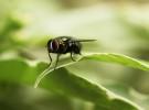 Algunas curiosidades sobre las moscas
