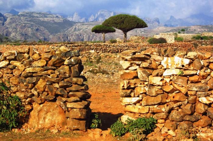 Socotra, una sorprendente isla de Yemen