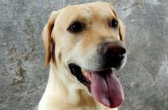 El Código Penal agrava las penas contra el maltrato animal