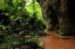 Lo que debes de saber sobre la Amazonia II