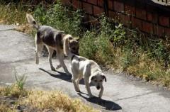 Paga 24.000 dólares para salvar a 400 animales del festival de carne de perro