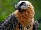 Estos animales están en peligro de extinción en nuestro país