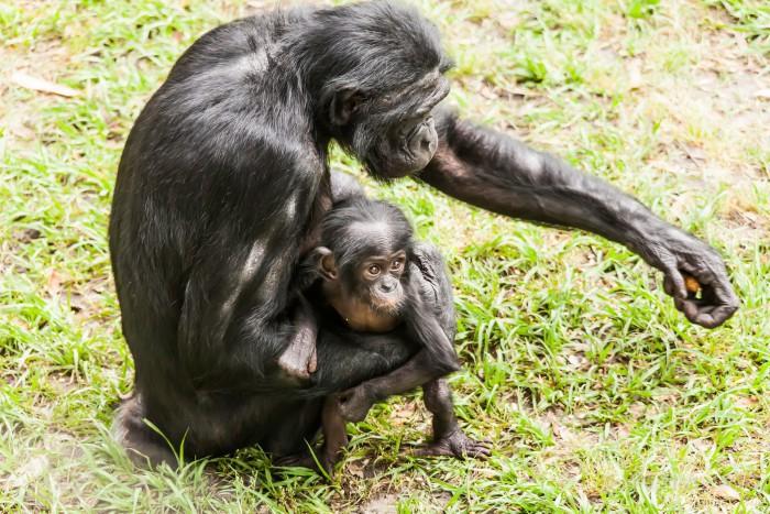 Los 10 hábitos de apareamiento animal más curiosos (I)