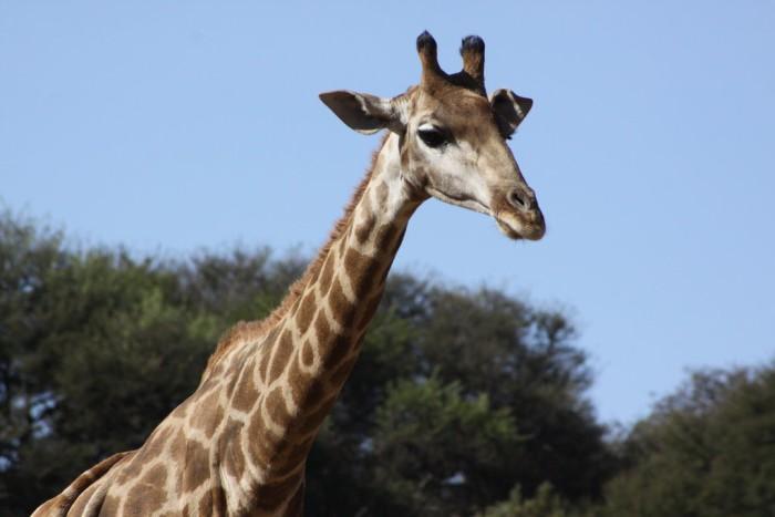 Los 10 hábitos de apareamiento animal más curiosos (III)