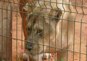 Mérida prohibirá los circos y atracciones que tengan animales en cautividad