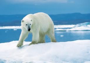 Científicos confirman que hay genes animales que se adaptan al cambio climático