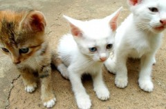 Síndrome de gran altura: Qué es y cómo evitarlo en los gatos