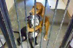 Kala y Keira: Dos perros se salvan gracias a una foto colgada en Facebook