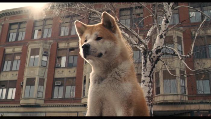 Las 5 mejores películas sobre perros