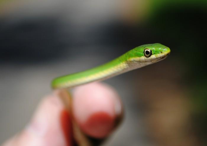Algunas curiosidades sobre las serpientes