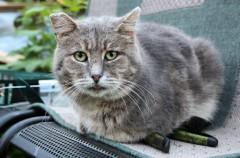 El abandono de animales aumenta en verano a pesar de las advertencias