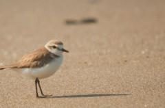 Las aves acuáticas de Doñana van camino de la desaparición