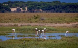 Doñana: 46 años de historia, desafíos y protección del medio ambiente