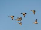 Delta Birding Festival 2015, por la conservación de las aves