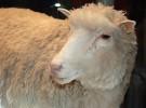 El Parlamento Europeo, más cerca de prohibir la clonación de animales